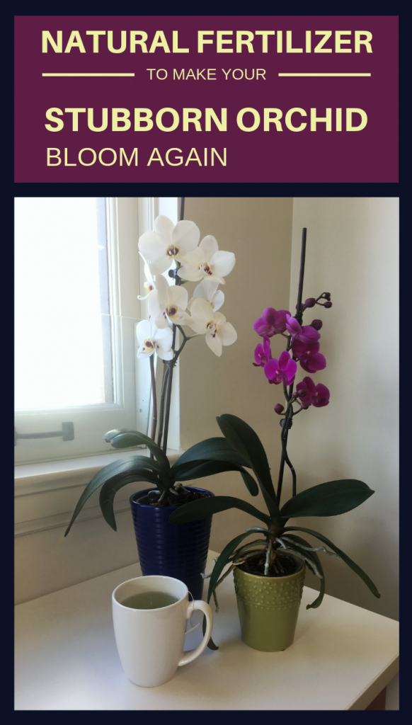 Natural Fertilizer To Make Your Stubborn Orchid Bloom Again